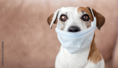 Fototapeta Dog with a medical mask is quarantined at home obraz