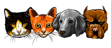 Cat And Dog Characters. Cartoo...