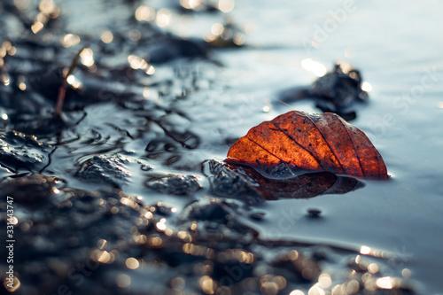 Fotografie, Obraz Oranges Blatt im Wasser Herbst