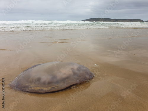 A jelly fish washed up on the beach with waves, sky and distant land in background Canvas-taulu