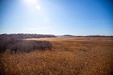 "Grassland ""Great Marsh"" On Plu..."