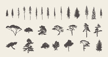 Set Silhouettes Trees Pine Fir...