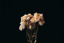 A Beautiful Flower Dead In The...