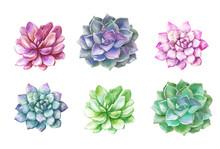 Watercolor Succulents Cacti. P...
