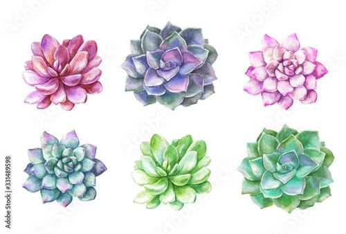 Fototapeta Watercolor succulents cacti. Plants illustration. obraz