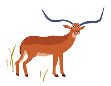 Illustration Of Antelope