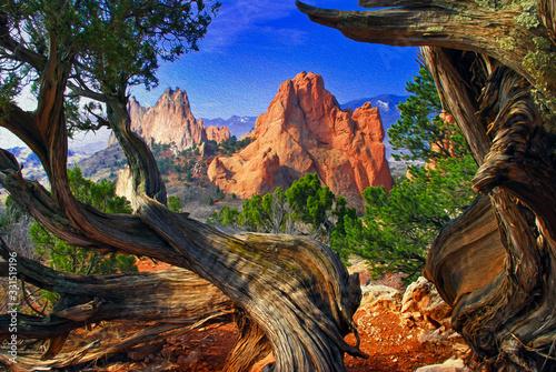 Fototapeta Garden of the Gods framed by twisted Juniper trees obraz