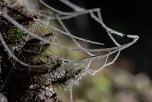 Glittery Spider Web With Ice C...