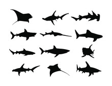 Collection Of Shark Silhouette...