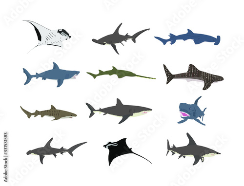 Photo Collection of shark illustration isolated on white background