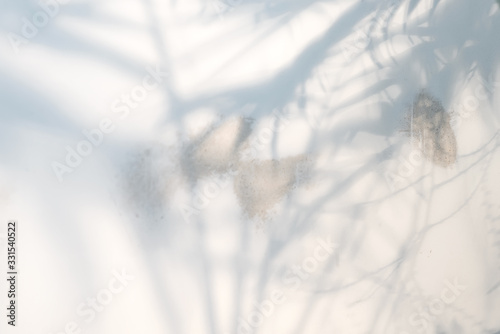 Decorative backdrop with shadows from tropical palm plant on a light grey background.