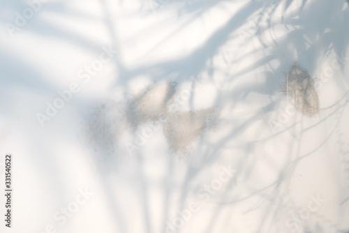 Obraz Decorative backdrop with shadows from tropical palm plant on a light grey background. - fototapety do salonu