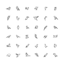 Set Of Different Birds. Vector Line Icons. Set Of Different Birds