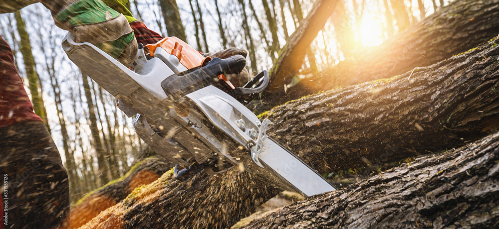 Fototapeta Woodcutter saws tree with chainsaw on sawmill