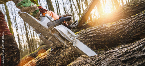 Woodcutter saws tree with chainsaw on sawmill #331555126