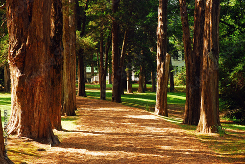 Photo A tree lines path leads to Rowan Oak, William Faulkner's home in Oxford, Mississ