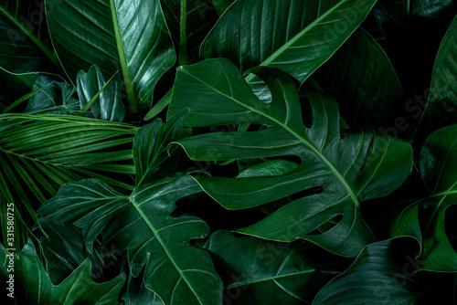 monstera-zielone-liscie-lub-monstera-deliciosa-w-ciemnych-odcieniach-tle-lub-zielone-lisciaste-tropikalne-lasy-sosnowe-do-kreatywnych-elementow
