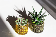 Evergreen Succulents In Glass Pots On White Table. Home Plants Cactus In Small Flowerpots With Dark Shadows. Minimal Still Life Image.