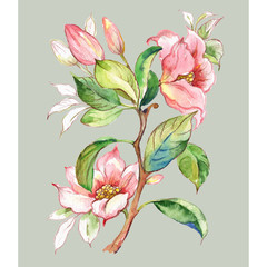 Fototapeta Do jadalni A sketch in pencil and watercolor blooming magnolia branch with buds