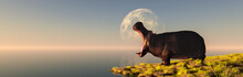 Hippopotamus In The Wild