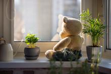Cute Knitted Teddy Bear Sits O...