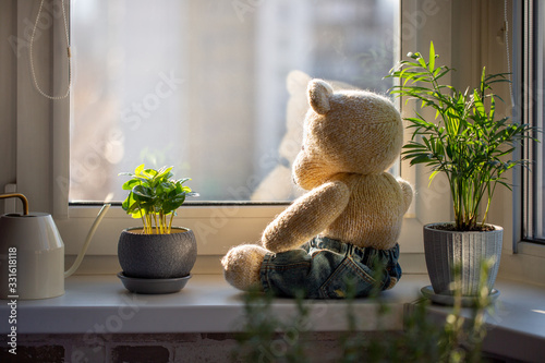 Photo Cute knitted teddy bear sits on a windowsill next to pots with houseplants and looks out the window on sunny day