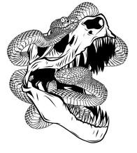 Dinosaur Skull. Drawing Of T-Rex Skull With Snake