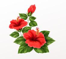 Beautiful Hibiscus Flower, Bud...