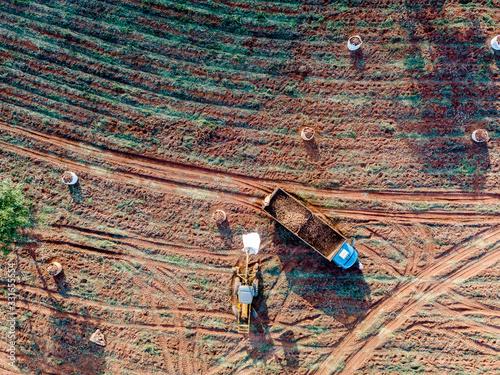 Aerial view of the cassava harvest in Mato Grosso do Sul, Brazil Canvas Print
