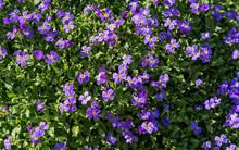 Frühlingshafte Blumenpracht