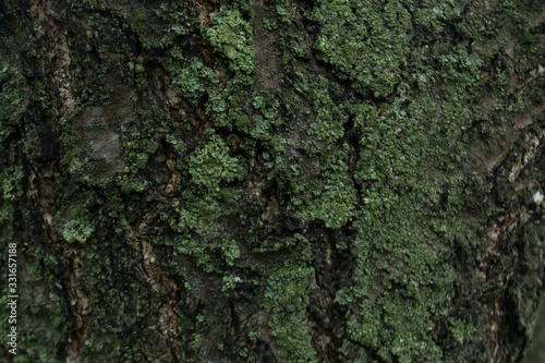 The texture of the tree bark Canvas Print