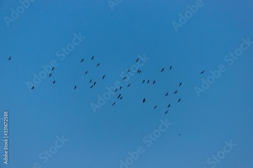 Photo 青空にいる大群の鳥