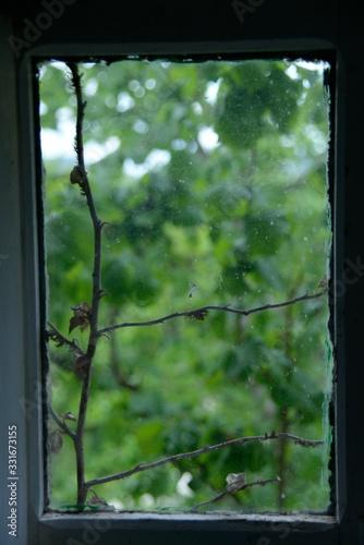 Enredadera muerta subiendo por el cristal de una ventana con fondo de ramas verd Canvas Print