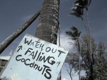 Hawaii Coconuts Sign