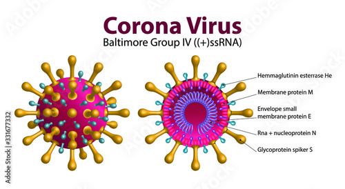 Obraz Diagram of Coronavirus particle structure, 2019-nCoV Novel Coronavirus Bacteria. No Infection and Stop Coronavirus Concepts. Dangerous Coronavirus Cell in China, Wuhan. Isolated Vector Icon - fototapety do salonu