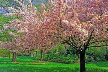 Panel Szklany Podświetlane Ogrody Cerisiers en fleurs