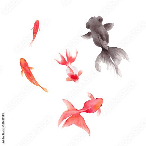 金魚5種の水彩イラストのトレースベクター Fototapeta
