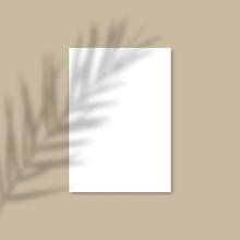 Shadow Overlay Palm Leaf Vecto...