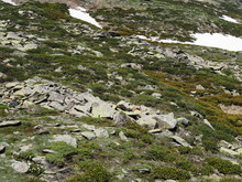 Rocky Mountainside Covered With Fresh Green Grass, Flowers And A Little Snow That Has Not Melted, Alpine Meadow