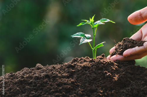 Obraz Closeup hand of person holding abundance soil with young plant in hand   for agriculture or planting peach nature concept. - fototapety do salonu