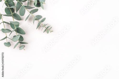Obraz Green eucalyptus branches on a white background. Flat lay, top view. - fototapety do salonu