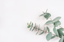 Green Eucalyptus Branches On A...