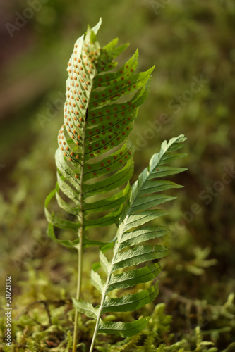 fern on green background