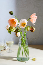 Spring Flowers, Pink Poppies I...