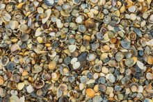 Background Of A Large Number Of Colorful Beautiful Sea Shells Close-up.