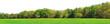 Leinwanddruck Bild Waldrand Panorama im Frühling - Freisteller