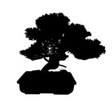 Bonsai Black Tree Silhouette V...