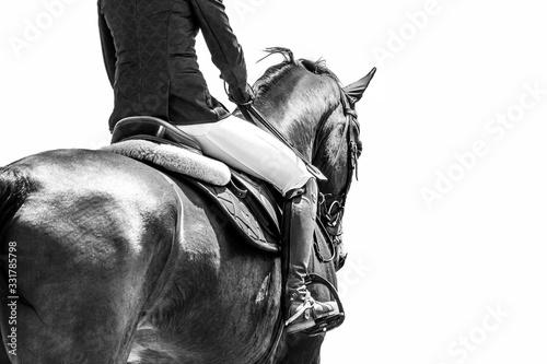 Fototapeta Equestrian obraz