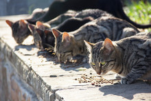 Feeding A Group Of Wild Stray Cats On The Street With Dry Food. Help Homeless Animals. Selective Focus.