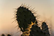 Spiky Silhouette